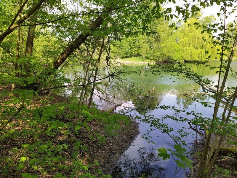 Blick auf den Seitenarm des Rheins in den Rheinauen