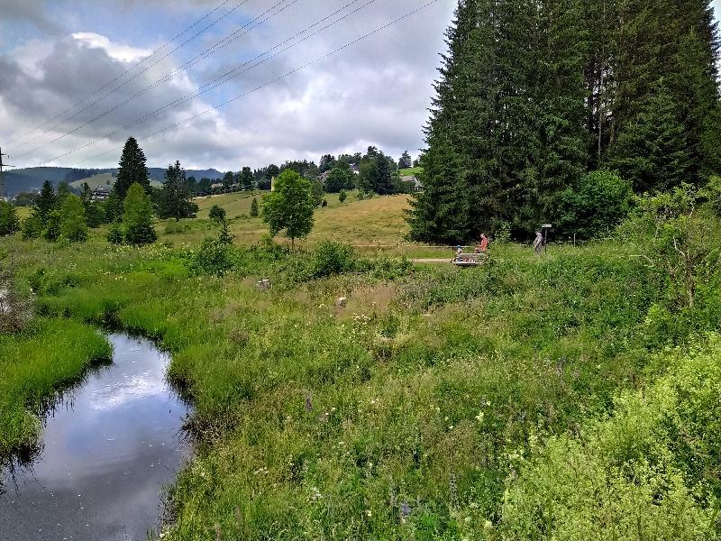 Wanderung von Falkau nach Altglashütten - An der Haslach