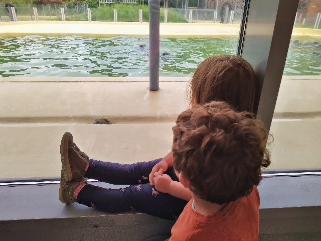 Die Kinder beobachten die Seehunde in der Seehundstation Norddeich
